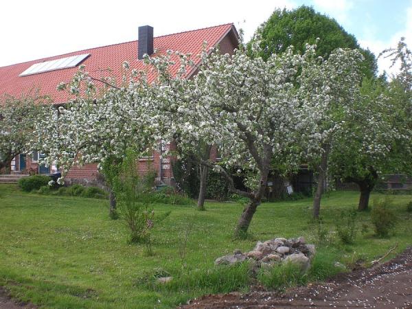 Ferienwohnung Steinhagen 2